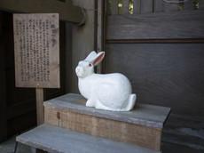 撫でウサギ